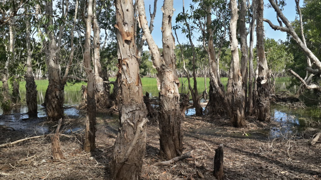 Day 12: Tabletop Swamp in Litchfield national park. Litchfield is located 100km south to Darwin.