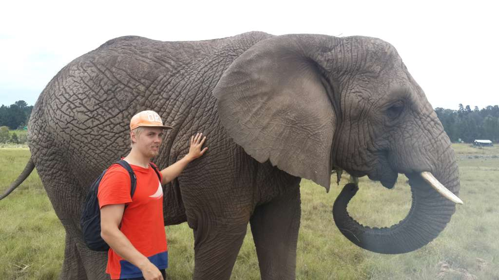 Knysna Elephan Park close to Plettenberg bay. I leared that elephants can communicate by stamping ground up to 15 kilometers and they are able to prepare to their own death after their teeth are too worn for eating.